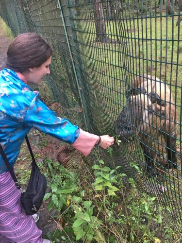 Me feeding a takin in Thimphu