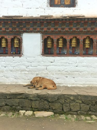 Dog in punakha