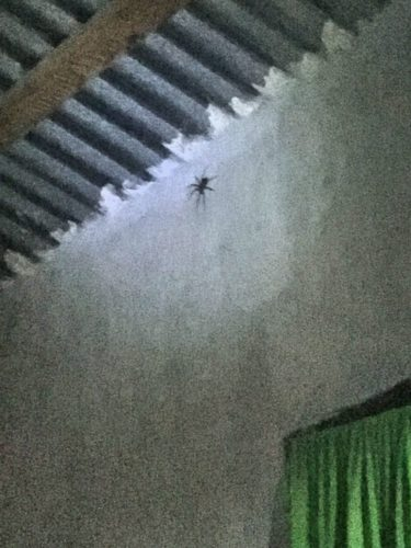 HUGE SPIDER ABOVE OUR BEDS