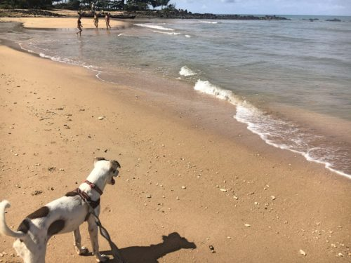 Dog walking on the beach on Koh Lanta-one of the best destinations in Thailand