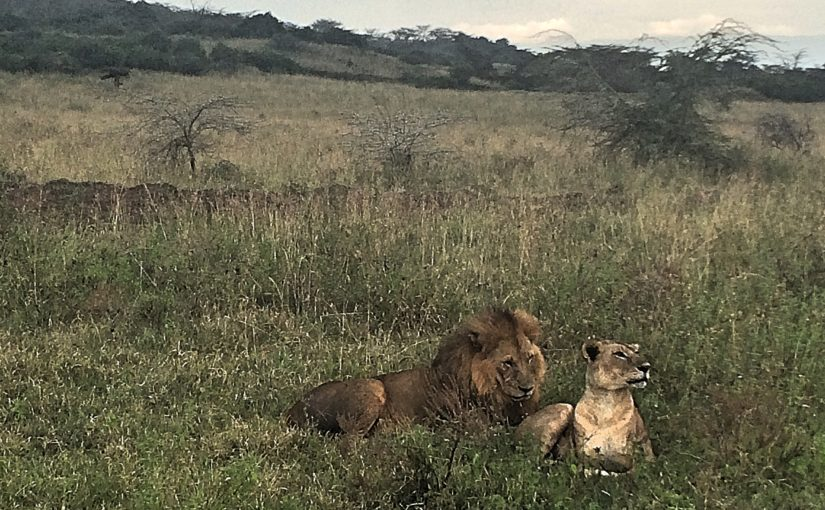 Lions on first day of overland trip